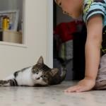 Chenti découvre un chat de près
