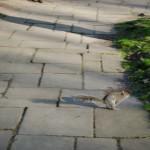 Squirrel !!! On l'aura cherché lui ^__^