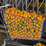 Caddie de mandarines