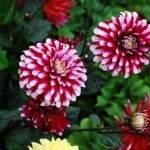 Flowers @ Marché Jean Talon