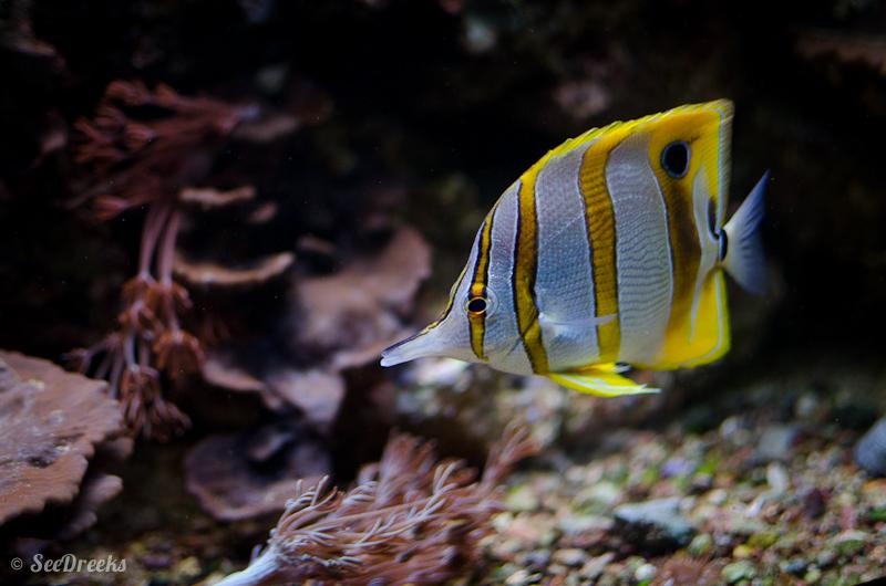 Ce poisson représente les métissage de mes enfants