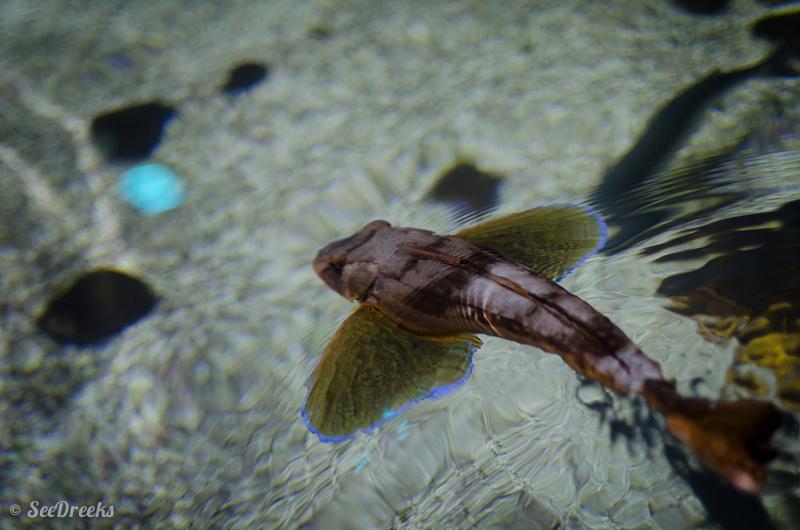 Oh les belles ailes