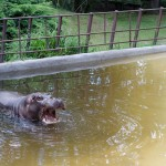 Ah, Djim ? Mais non Hippo !